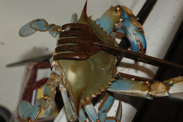 Blue Crab Liverpool Tx